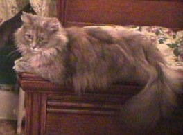 Catherine Faye, former stray