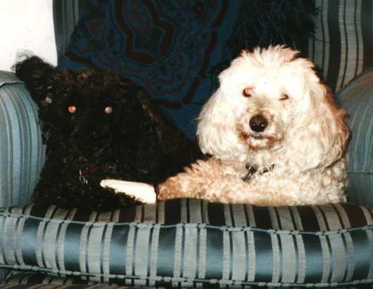 Scruffy and Billy